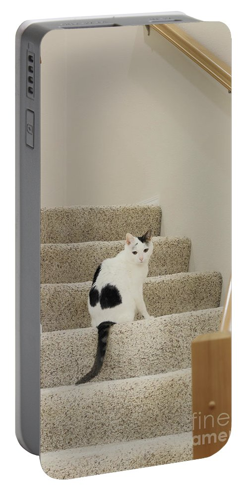 Feline Portable Battery Charger featuring the photograph Feline On Stairs by Lee Serenethos
