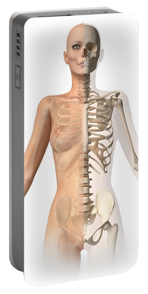 Three Dimensional Portable Battery Charger featuring the photograph Female Body With Bone Skeleton by Leonello Calvetti