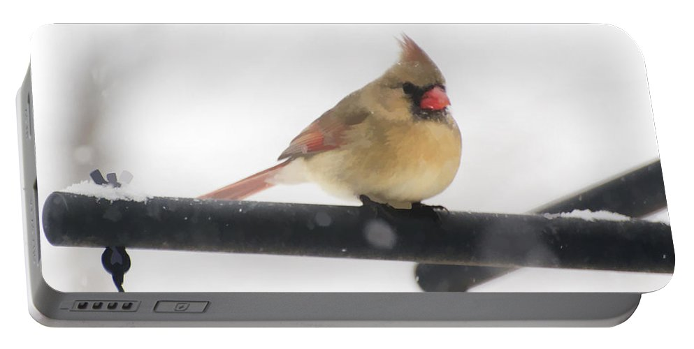 Bird Portable Battery Charger featuring the photograph Female Cardinal In Snow by Donna Doherty