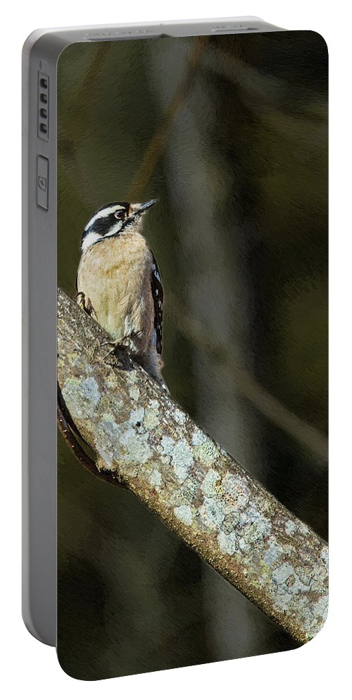 Woodpecker Portable Battery Charger featuring the painting Female Downy Woodpecker by John Haldane