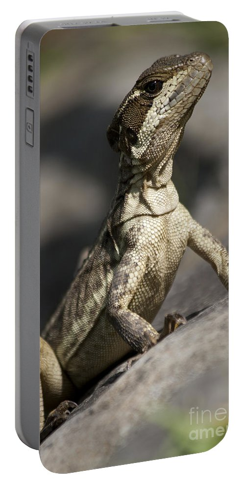 Heiko Portable Battery Charger featuring the photograph Female Jesus Lizard by Heiko Koehrer-Wagner