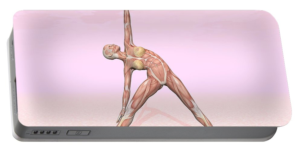 Anatomy Portable Battery Charger featuring the digital art Female Musculature Performing Triangle by Elena Duvernay