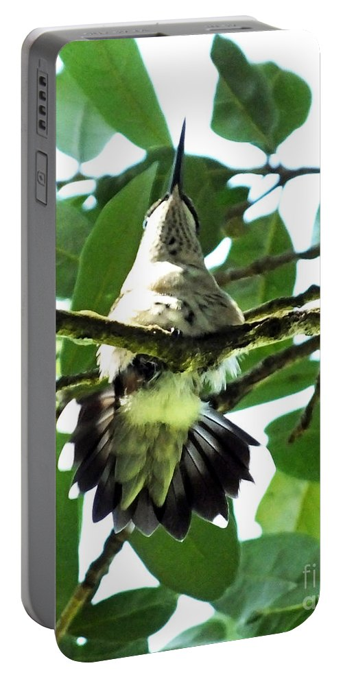 Bird Portable Battery Charger featuring the photograph Female Ruby Throated Hummingbird by Lizi Beard-Ward