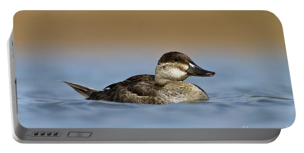 Ruddy Duck Portable Battery Charger featuring the photograph Female Ruddy Duck by Bryan Keil