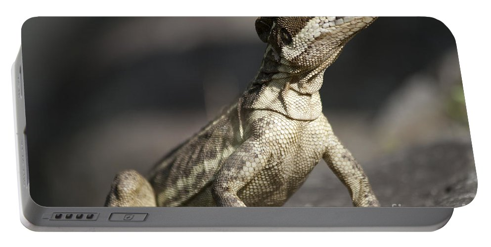 Heiko Portable Battery Charger featuring the photograph Female Striped Lizard by Heiko Koehrer-Wagner