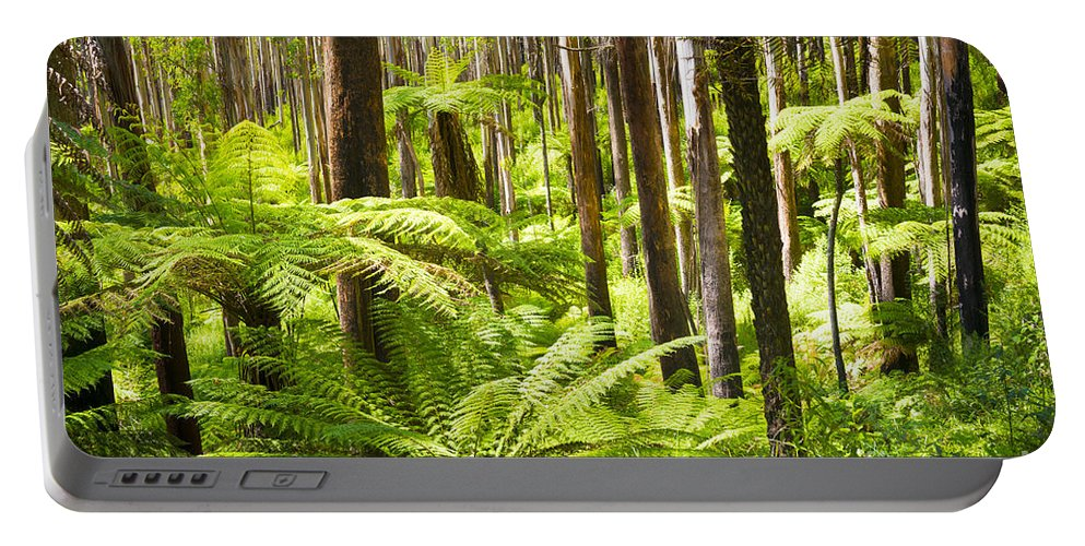 Black Portable Battery Charger featuring the photograph Fern Forest by Tim Hester