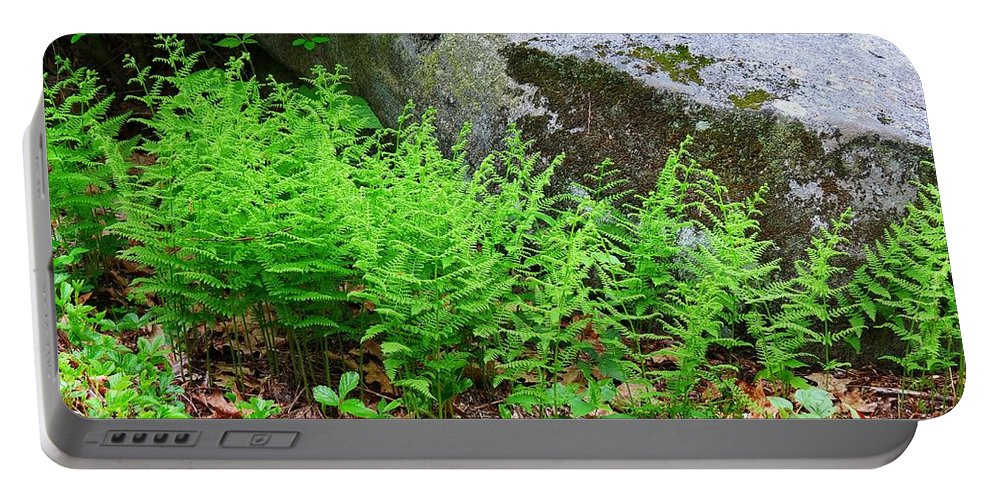 Ferns Portable Battery Charger featuring the photograph Fern Patch by MTBobbins Photography
