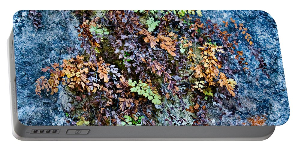 Ferns Portable Battery Charger featuring the photograph Ferns On Cliffside by Gary Richards