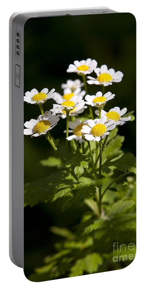 Feverfew Portable Battery Charger featuring the photograph Feverfew by Jason O Watson