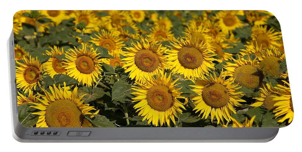 Sunflower Portable Battery Charger featuring the photograph Field Of Sunflowers by Brian Jannsen
