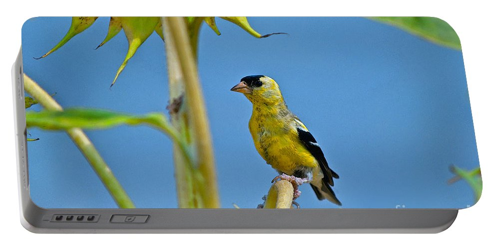 Sunflower Portable Battery Charger featuring the photograph Finch Finale by Gwyn Newcombe