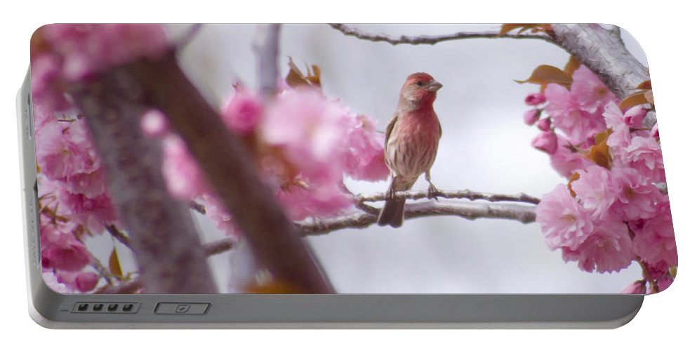 Bird Portable Battery Charger featuring the photograph Finch Frame by Andrea Goodrich