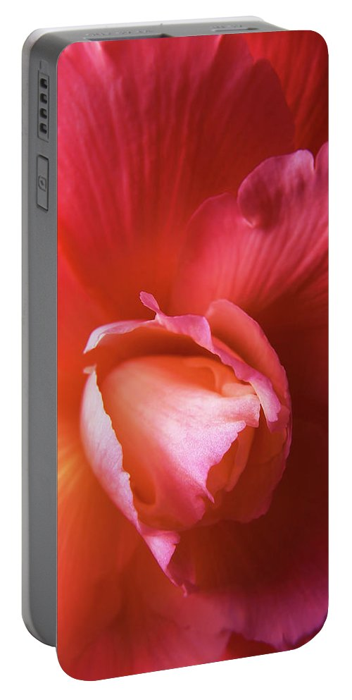 Begonia Portable Battery Charger featuring the photograph Fire And Ice Floral Begonia by Jennie Marie Schell