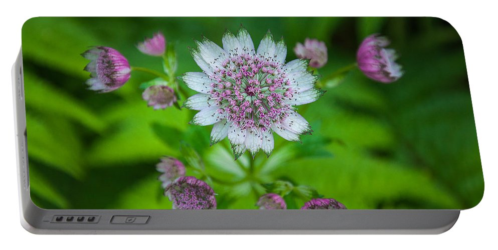 Flowers Portable Battery Charger featuring the photograph First Bloom by Roxy Hurtubise