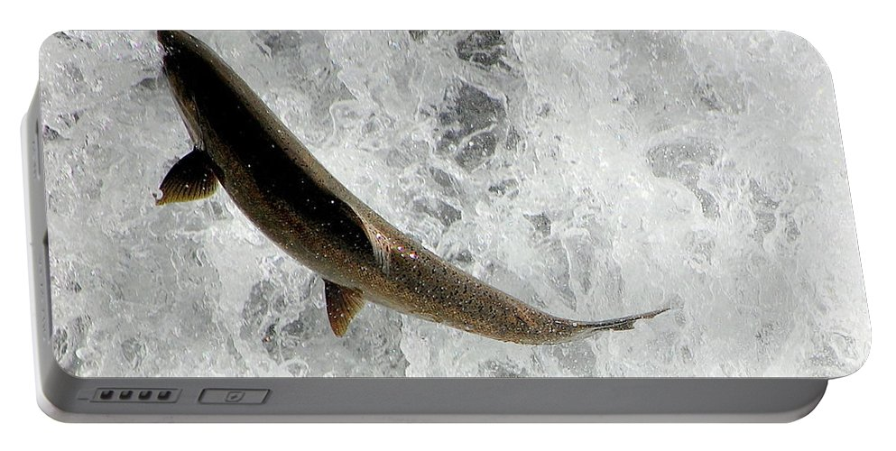 Fish Portable Battery Charger featuring the photograph Fish Out Of Water by AJ Schibig