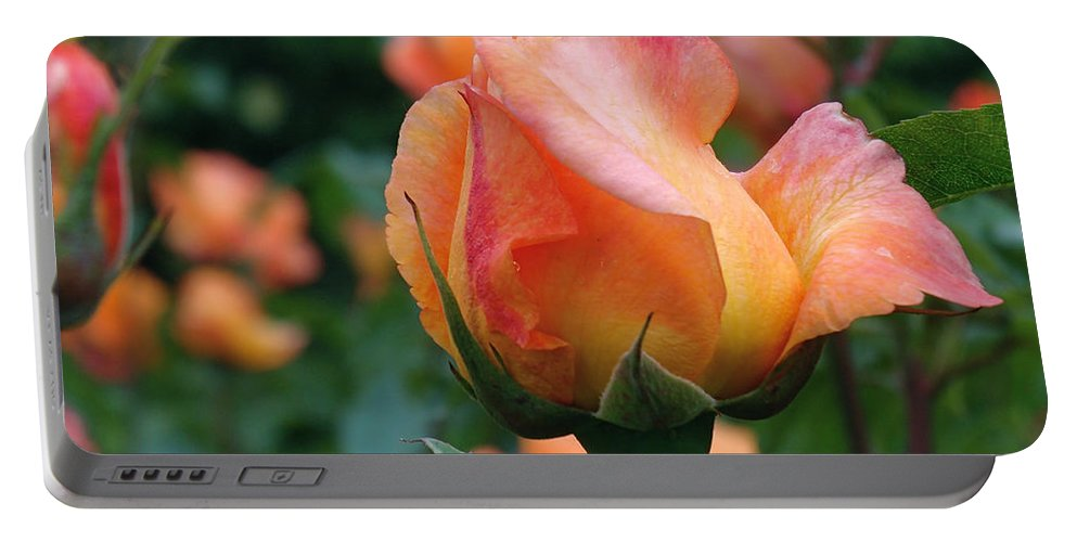 Rose Portable Battery Charger featuring the photograph Fit For A Queen by Rona Black
