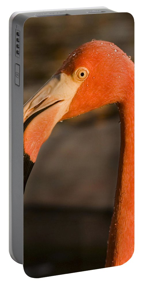 3scape Portable Battery Charger featuring the photograph Flamingo by Adam Romanowicz