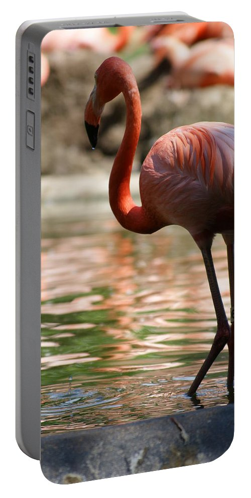 Bird Portable Battery Charger featuring the photograph Flamingo by Heidi Poulin