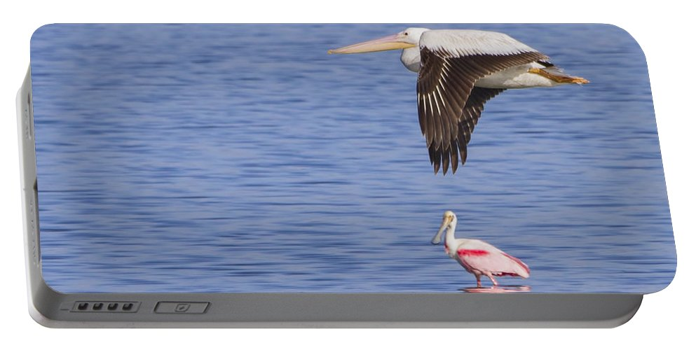 Seagull Portable Battery Charger featuring the photograph Flight Of The Pelican by Mark Andrew Thomas