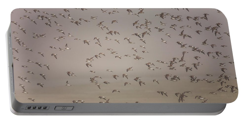 Tofino Portable Battery Charger featuring the photograph Flock Of Plovers by Christopher Kimmel