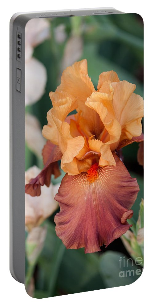 Landscapes Portable Battery Charger featuring the photograph Floral 12 by Steve Herndon