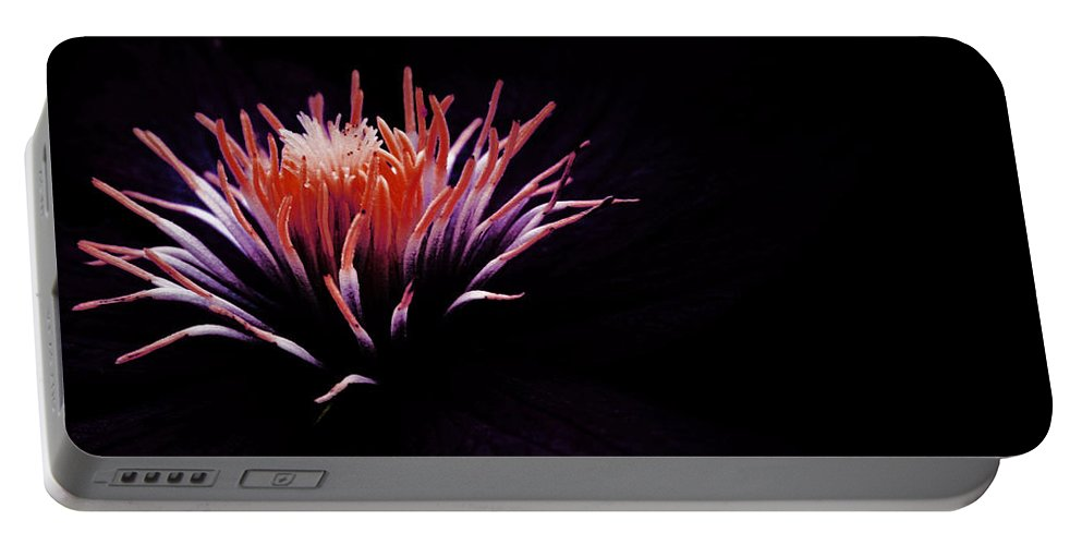 Floral Portable Battery Charger featuring the photograph Floral Explosion by Susan McMenamin