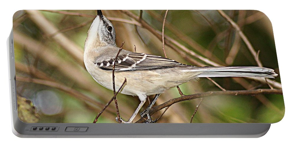 Mockingbird Portable Battery Charger featuring the photograph Florida Mockingbird by Paul Wilford
