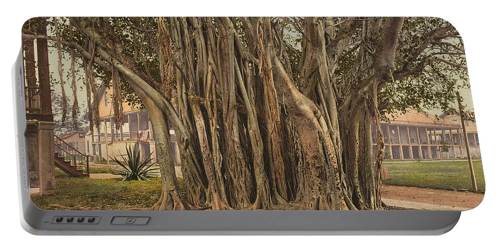 1890 Portable Battery Charger featuring the painting Florida Rubber Tree, C1900 by Granger