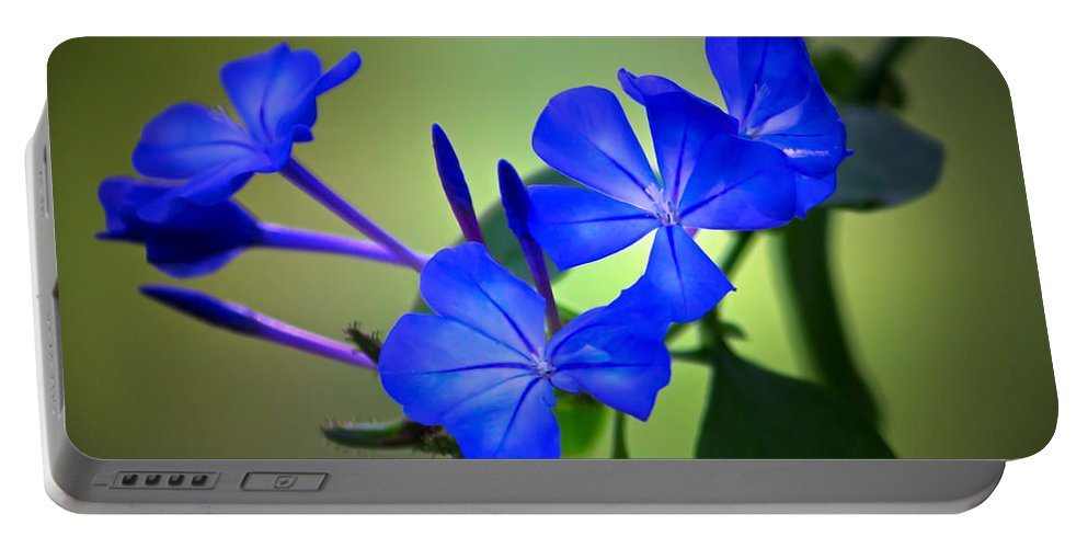 Plant Portable Battery Charger featuring the photograph Flower Burst by Mark Andrew Thomas