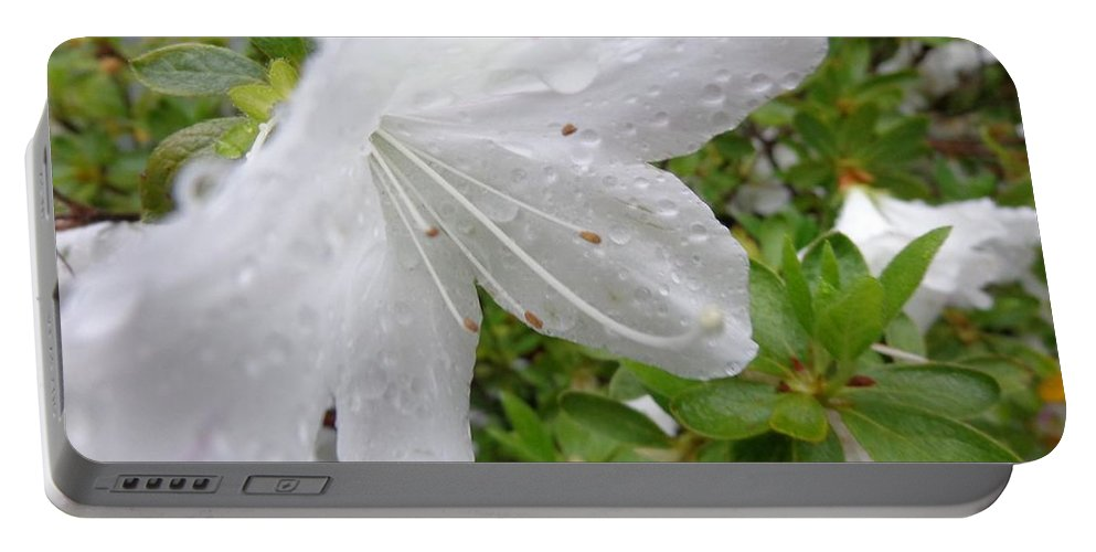 Rain Portable Battery Charger featuring the photograph Flower Laced With Rain Drops by Jannice Walker