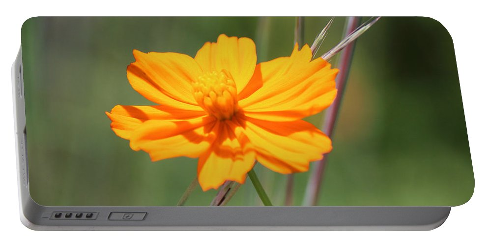 Photography Portable Battery Charger featuring the photograph Flower Lit By The Sun's Rays by Jackie Farnsworth