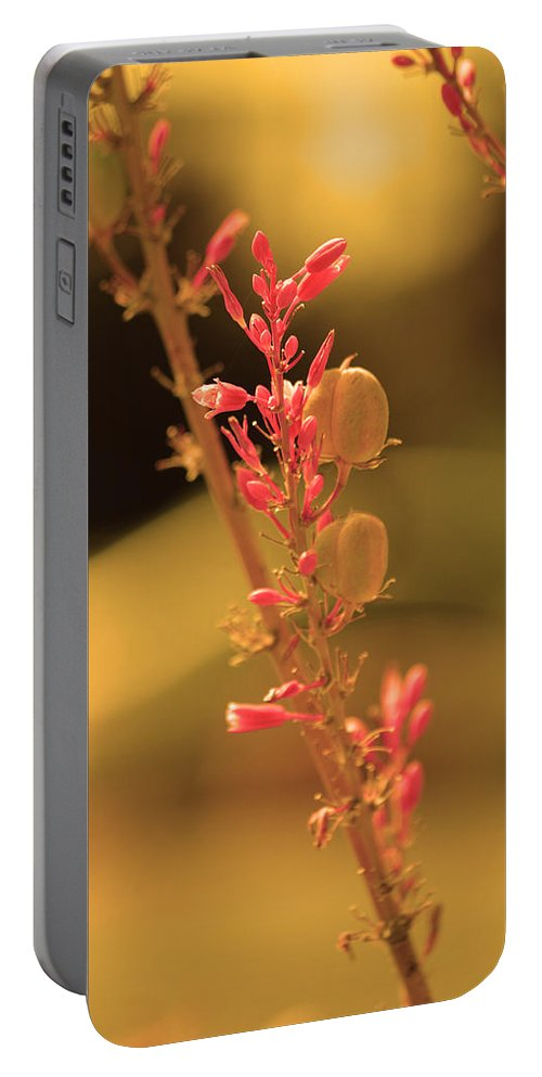 Pink Flower Portable Battery Charger featuring the photograph Flower Of Light by Deprise Brescia