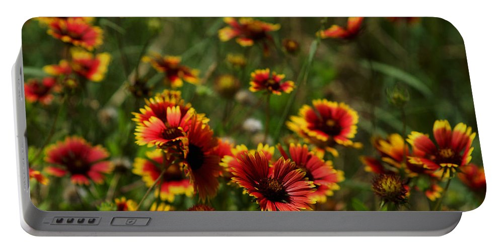 Austin Texas Portable Battery Charger featuring the photograph Texas Indian Blanket - Luther Fine Art by Luther Fine Art