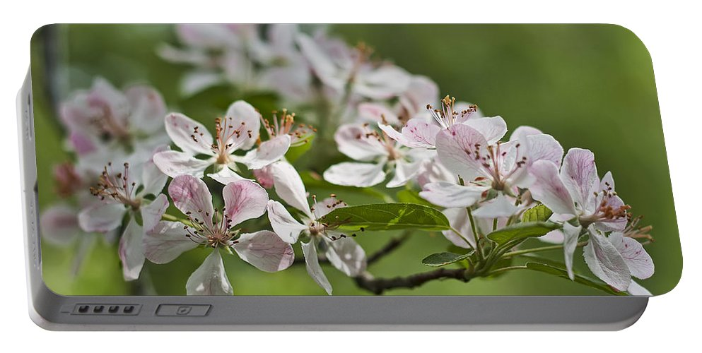 Crabapple Portable Battery Charger featuring the photograph Flowering Crabapple 2 by Scott Wood