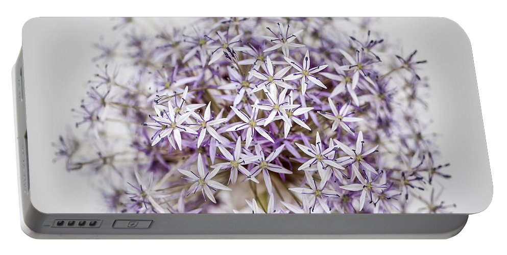 Onion Portable Battery Charger featuring the photograph Flowering Onion Flower by Elena Elisseeva
