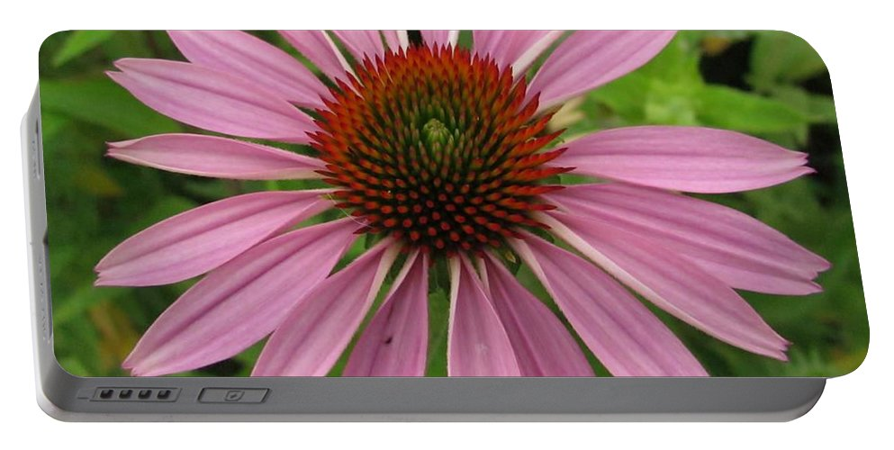 Flower Portable Battery Charger featuring the photograph Flowering Purple Cone Flower by Eric Noa