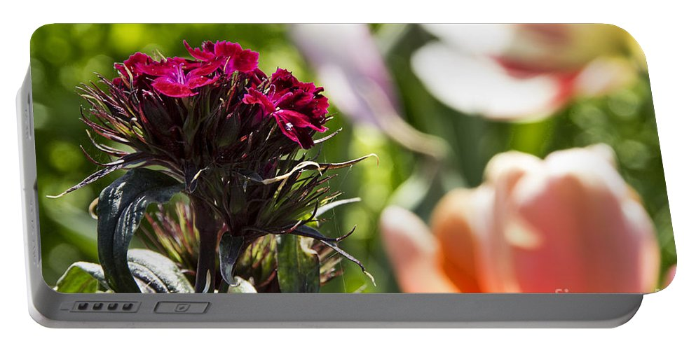 Tulips Portable Battery Charger featuring the photograph Flowers At Dallas Arboretum V13 by Douglas Barnard