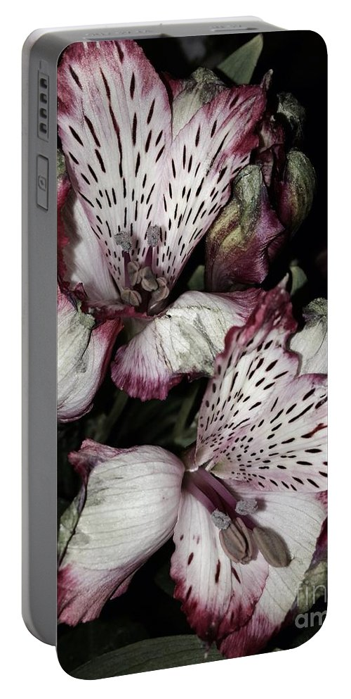 Flowers Portable Battery Charger featuring the photograph Flowers In Bloom by Christy Gendalia