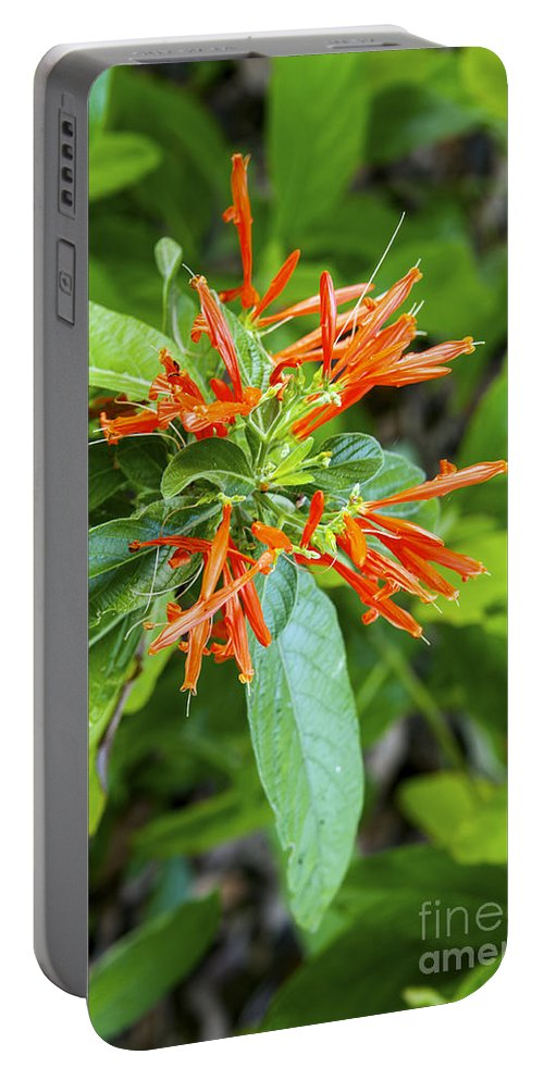 Flower Portable Battery Charger featuring the photograph Flowers In The Neighborhood by Bob Phillips