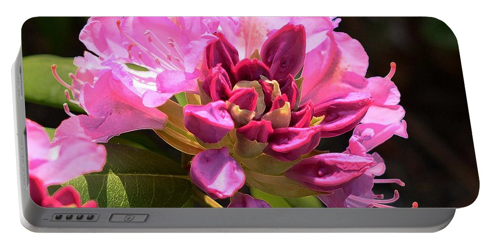 Rhododendron Portable Battery Charger featuring the photograph Flowers Of Spring by Cindy Manero