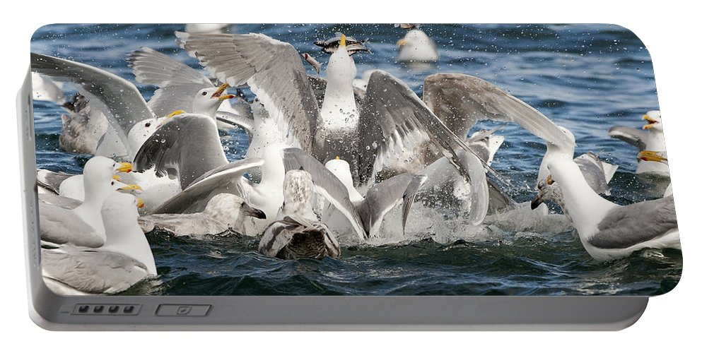 Gull Portable Battery Charger featuring the photograph Flying Fish by Ted Raynor