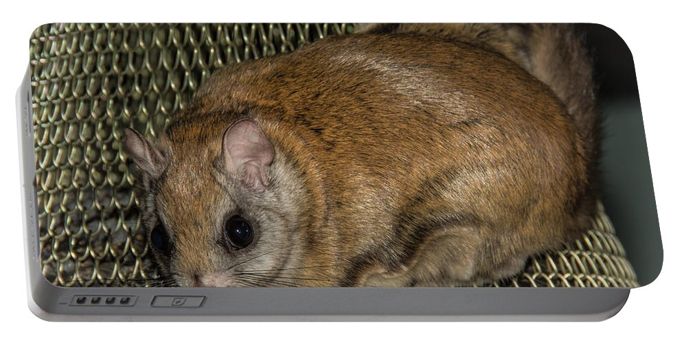 Portable Battery Charger featuring the photograph Flying Squirrel On The Feeder by Cheryl Baxter