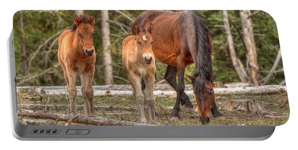 Wild Horses Portable Battery Charger featuring the photograph Foal Spot by James Anderson