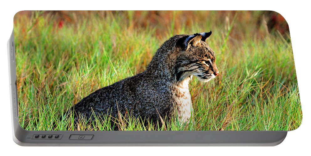 Bob Cat Portable Battery Charger featuring the photograph Food In Sight by Davids Digits