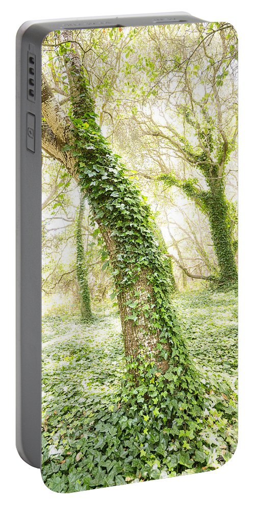 Los Osos Oak State Natural Reserve Portable Battery Charger featuring the photograph Forest Glow - The Magical Trees Of The Los Osos Oak Reserve by Jamie Pham