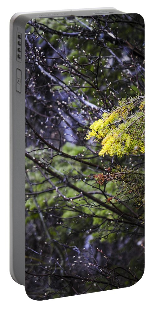 Forest Portable Battery Charger featuring the photograph Forest Peace by Fran Riley