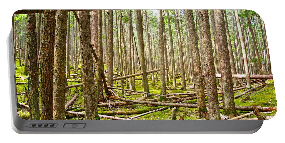 Forest With Moss Carpet Portable Battery Charger featuring the photograph Forest With Moss Carpet Along John's Lake Trail In Glacier Np-mt by Ruth Hager