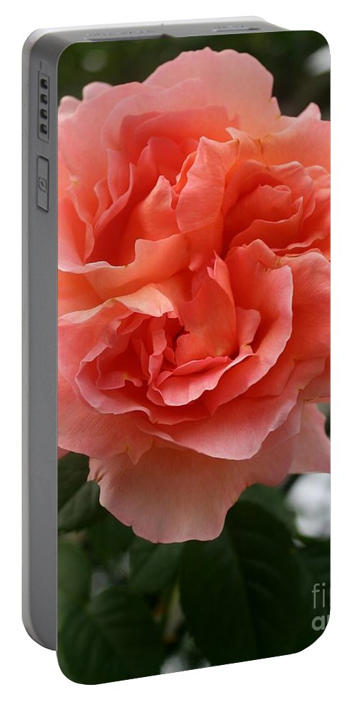 Rose Portable Battery Charger featuring the photograph Formidable Bloom by Christiane Schulze Art And Photography