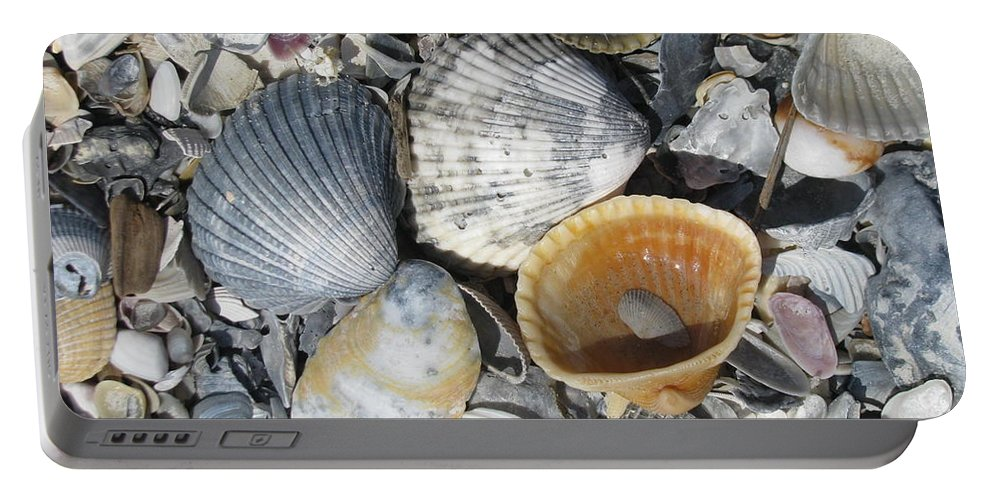 Landscape Portable Battery Charger featuring the photograph Four Beautiful Shells by Ellen Meakin