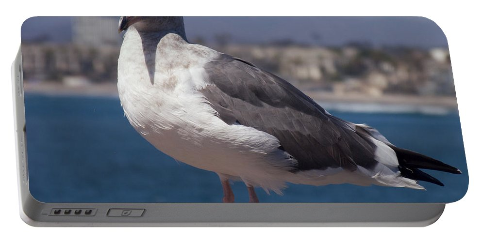 Seagull Portable Battery Charger featuring the photograph Waterfowl Model by Richard J Cassato